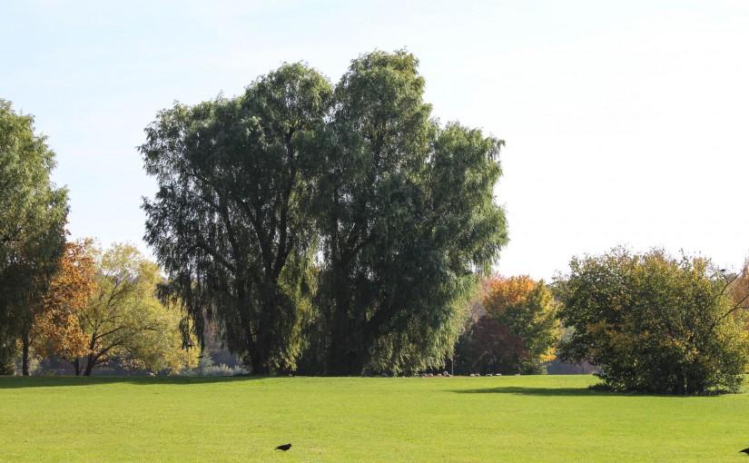Baumträume